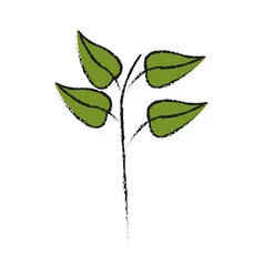 plant with leaves vector image