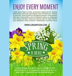 Spring holiday poster of daffodils bouquet vector