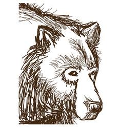 animal wild bear face hand-drawing vector image