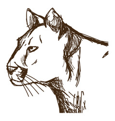 Hand drawn cougar or mountain lion portrait vector