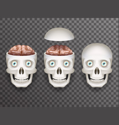 realistic human skull with eyes and brain isolated vector image vector image