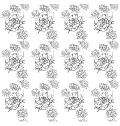 a floral seamless ornament peony flowers vector image