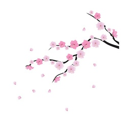 Blooming cherry 1 vector