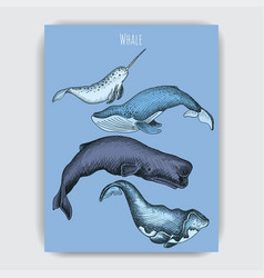 card with whale hand drawn vector image
