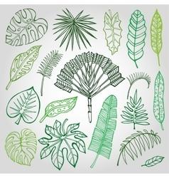 Tropical palm leavesbranches setOutlineGreen vector
