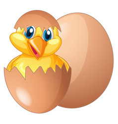 chick coming out from egg vector image vector image
