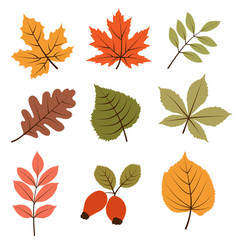autumn leaves collection isolated on white vector image