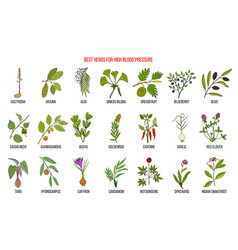 Best herbs that lower high blood pressure vector