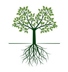Green tree with roots and leafs vector