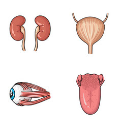 Kidney bladder eyeball tongue human organs set vector