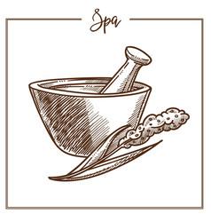 Spa salon herbal mortar treatment sketch vector