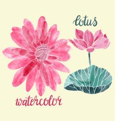lotuses decorative symbol vector image