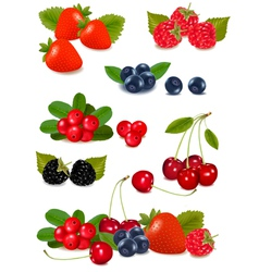 big group of fresh berries vector image
