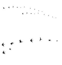 birds set flying birds vector image