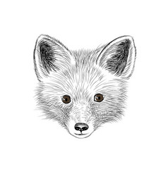Fox baby face wild animal sketch vector