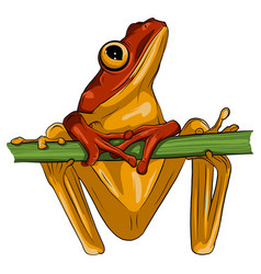 image an frog design on white background vector image