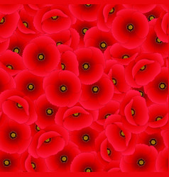 Red corn poppy seamless background vector