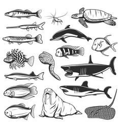 Sea fish and animal isolated icons vector