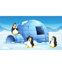 Three penguins near an igloo vector image