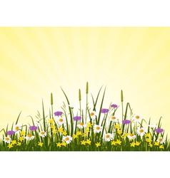 Wild flower meadow vector image