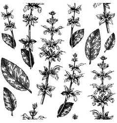 herbal pattern with sage leaves and flowers vector image