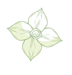 Silhouette chamomile flower with petals to organic vector