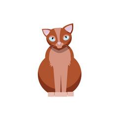 sitting cute cat brown kitty flat cartoon vector image
