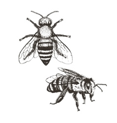 Bee vintage set vector image vector image
