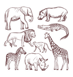 different animals of savana and africa vector image vector image