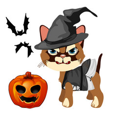 angry cat in hat witch bares his sharp teeth vector image