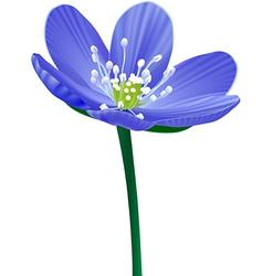 Blue Flower isolated vector
