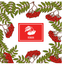 rowan icon in the frame vector image