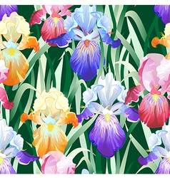 Seamless Background with Multicolored Iris Flowers vector image