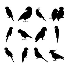 Set of parrot silhouette icons in flat style vector