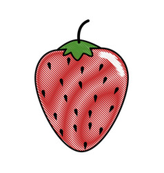 Strawberry fruit food vector