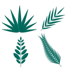 tropical palm tree branches vector image