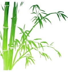 Watercolor Bamboo branches isolated on the white vector
