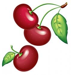 09 cherry vector image vector image