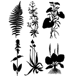 Collection of silhouettes of plants vector image