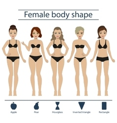 Female body shape set vector image