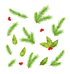 Branches of fir tree and holly leaves vector