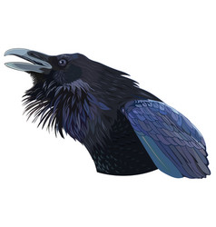 Cawing black crow vector