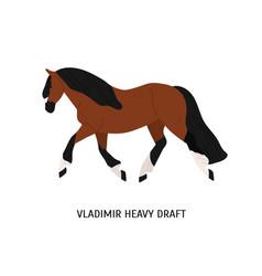 Vladimir heavy draft breed horse flat vector
