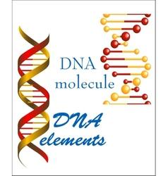 DNA molecule and elements vector image vector image