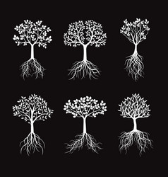 Set white trees with leafs and roots vector