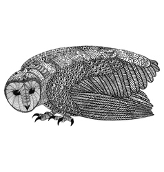 The barn owl vector image