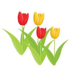 tulips vector image