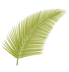 Palm leaf vector