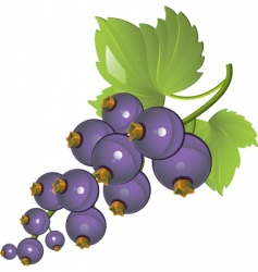 wine grapes vector image vector image