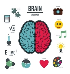 Human brain infographics set flat style vector image